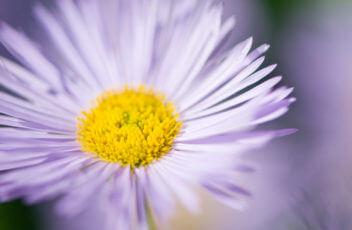 kukkakauppa_leinikki1
